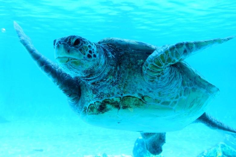 多彩日本 | 沖繩海洋博公園海龜 | 海洋之國 | 海鮮之國 | 日本的別稱 | 巡日旅行攝