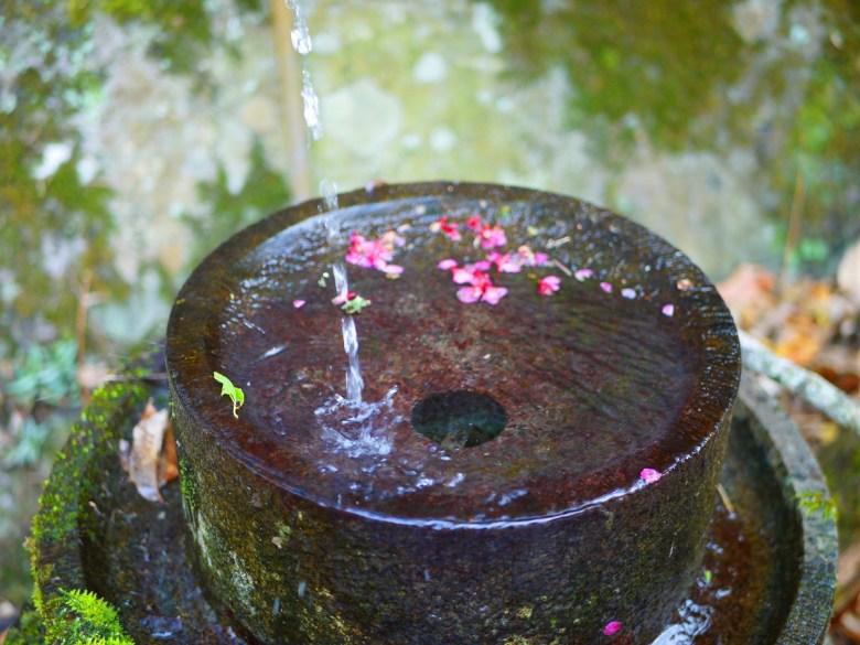 流水與櫻花 | 青苔 | 清新 | Basianshan National Forest Recreation Area | Heping | Taichung | RoundtripJp