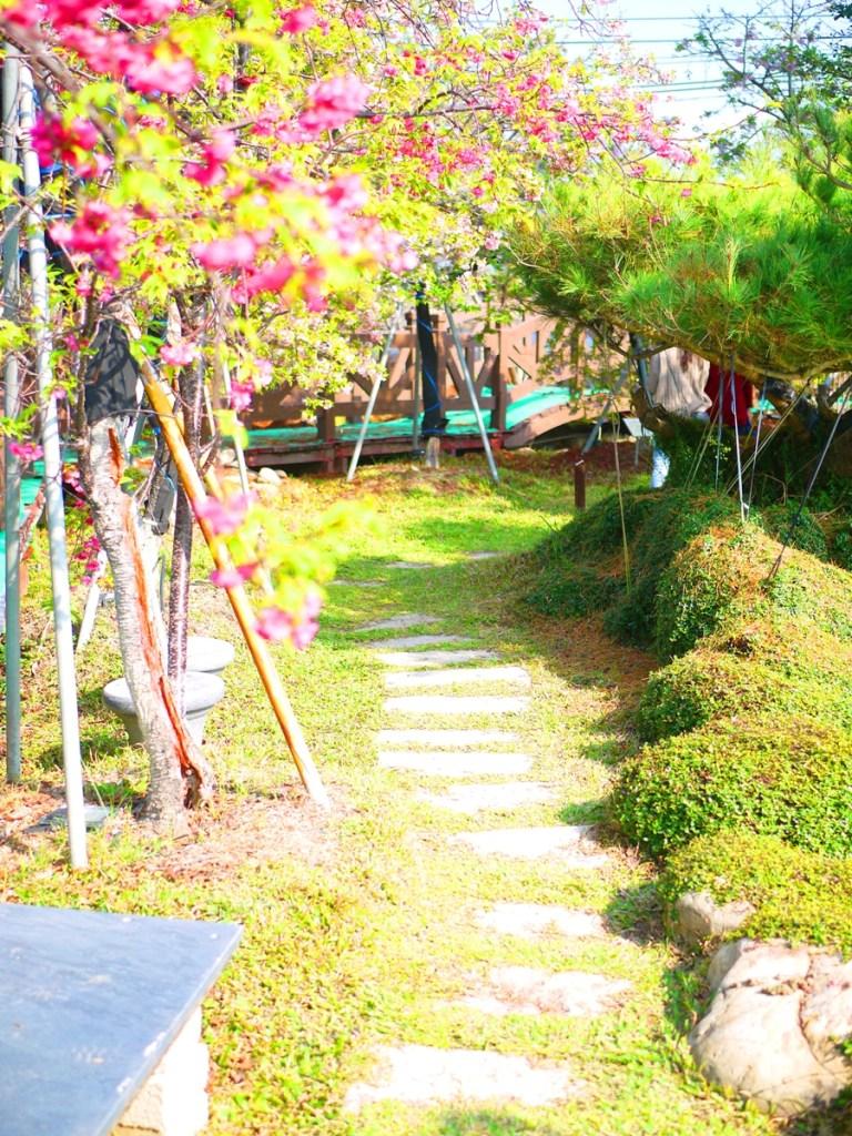 綠色小徑 | 櫻花小徑 | 感受自然與花香 | 芬園花卉生產休憩園區主題櫻花 | 烏日 | 台中 | 巡日旅行攝