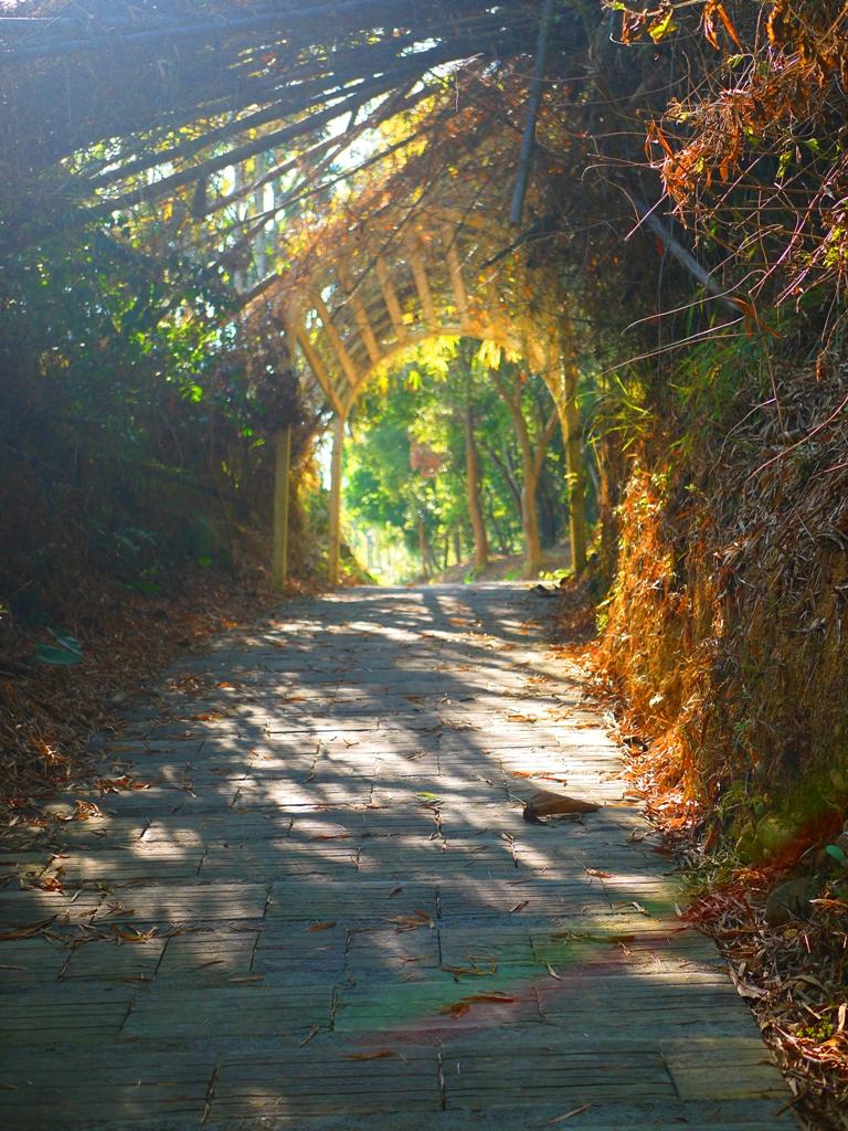 休息橋後步道 | 坡度陡峭 | 通往八卦路 | 通往易經大學大正門 | 漳和撼龍步道 | 巡日旅行攝