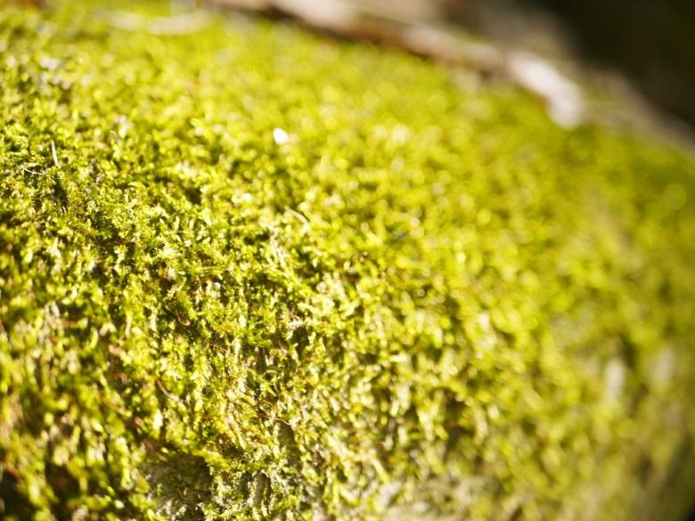 翠綠的青苔 | 漳和撼龍步道 | 自然原始 | Zhang Heli | Dragon Trail | RoundtripJp