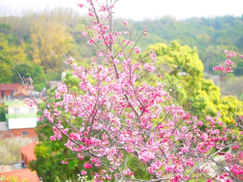 盛開與茁壯的山櫻花 | 迎向天際 | 美麗遠山 | Hushanyan | Huatan | Changhua | RoundtripJp