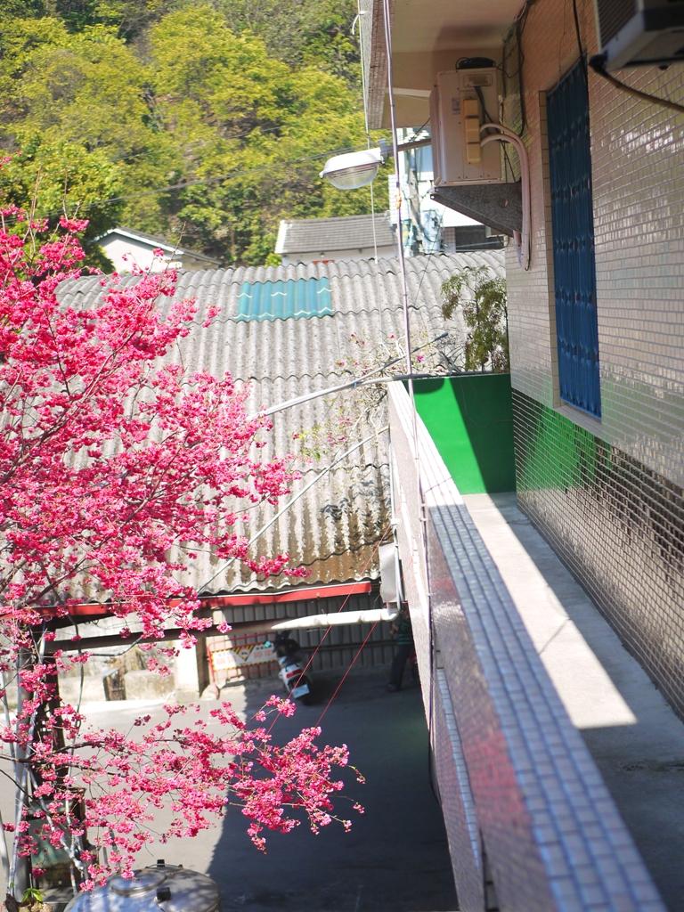 陽台上綠色角落為最佳觀賞滿開八重櫻位置之一 | 湖水 | 員林 | 彰化 | 巡日旅行攝