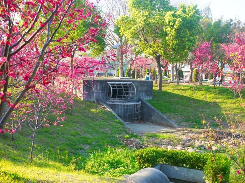 綠色自然 | 滿是綠樹與櫻花樹 | Sakura | さくら | サクラ | Houli | Taichung | RoundtripJp