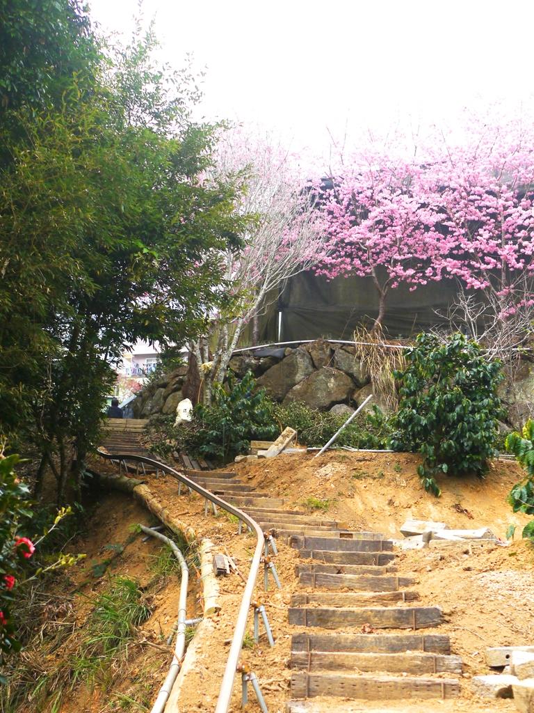 農用單軌搬運車軌道 | 枕木山道 | 山上農家 | 紅粉佳人 | 石壁風景區 | Gukeng | Yunlin | 巡日旅行攝