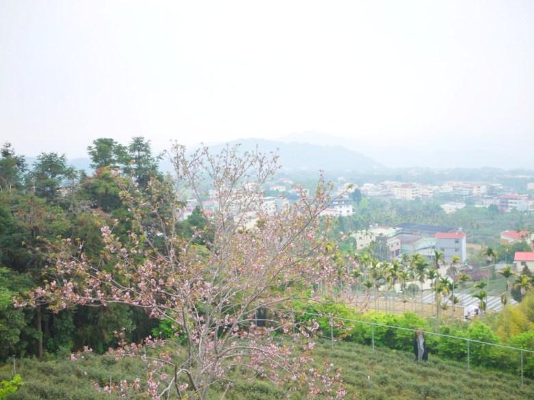 鳳凰教育中心觀景平台前的美景 | 雲霧繚繞 | 絕美山景 | 鹿谷 | 南投 | 巡日旅行攝