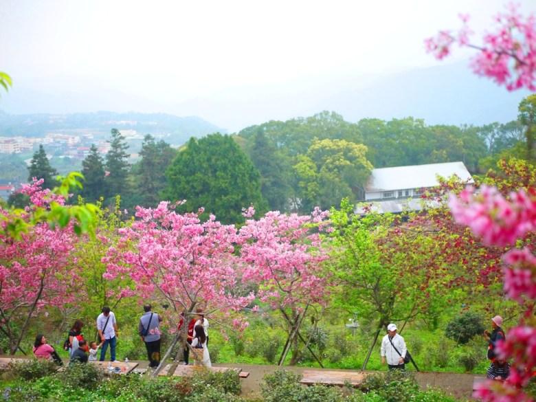 橫向的櫻花步道與沿途可休息的木桌椅 | 日本味 | 南投鳳凰自然教育園區 | ルーグー | Lugu | Nantou | RoundtripJp
