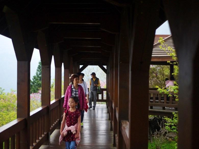 觀景迴廊 | 木頭的溫潤步道 | 臺灣旅人 | 南投鳳凰自然教育園區 | ルーグー | Lugu | Nantou | RoundtripJp