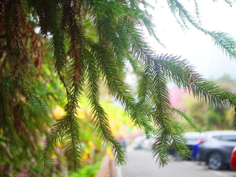 住宿停車場 | 停滿滿滿的車子 | 一位難求 | 停車空間少 | 南投鳳凰自然教育園區 | 鹿谷 | 南投 | 巡日旅行攝