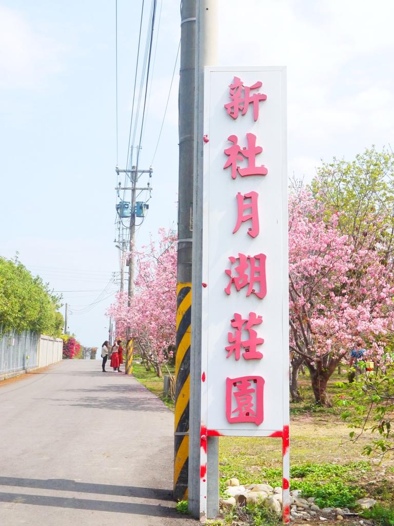 富士櫻 | 小豆櫻 | 豆櫻 | 免費私人園區 | 新社月湖莊園 | 新社 | 台中 | 一抹和風 | 巡日旅行攝