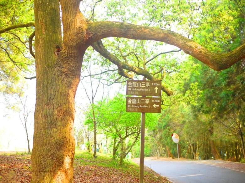 金龍山三亭 0.02km | 金龍山二亭 0.2km | 往前金龍山觀景臺第二停車場 | 魚池 | 南投 | ユーチー | Yuchi | Nantou | 巡日旅行攝
