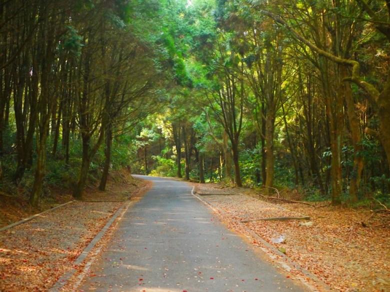 綠樹蒼蒼 | 落葉 | 森呼吸 | 車道 | 自然清新 | 魚池 | 南投 | ユーチー | Yuchi | Nantou | RoundtripJp