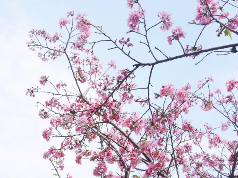 櫻與蝶 | 藍天 | 吉野櫻 | 日本風情 | 金龍山觀景臺 | 魚池 | 南投 | ユーチー | Yuchi | Nantou | 巡日旅行攝