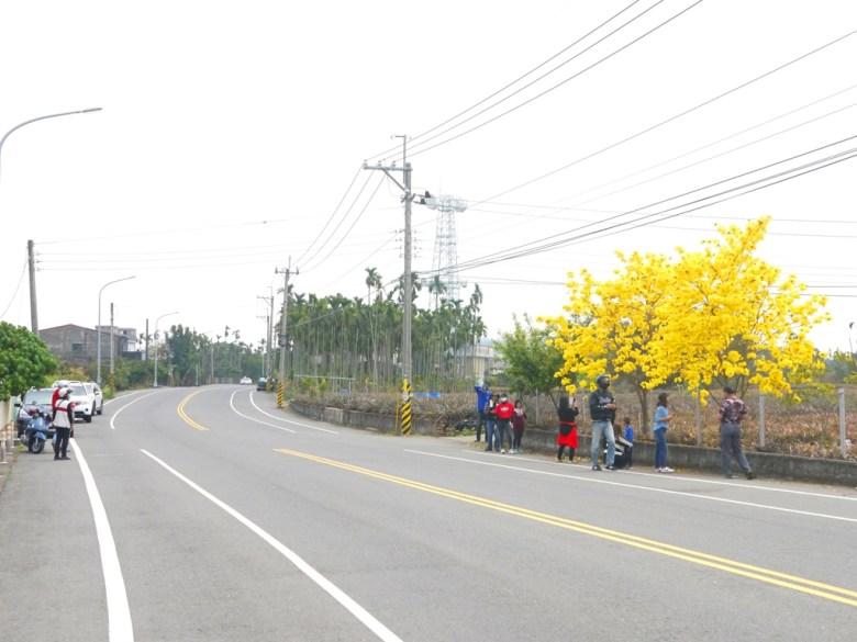 139縣道上的美麗畫面 | 黃澄澄的金黃花朵 | 芬園鄉139縣道 | ふんえん | ジャンホワ | RoundtripJp