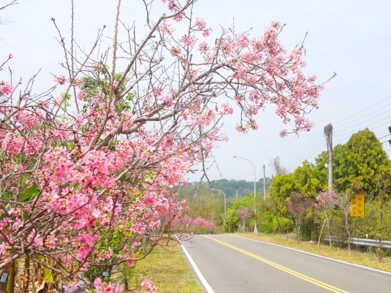139縣道上的一抹紅顏 | 富士櫻 | 清新自然的縣道 | 芬園鄉139縣道 | Fenyuan | Changhua | 巡日旅行攝