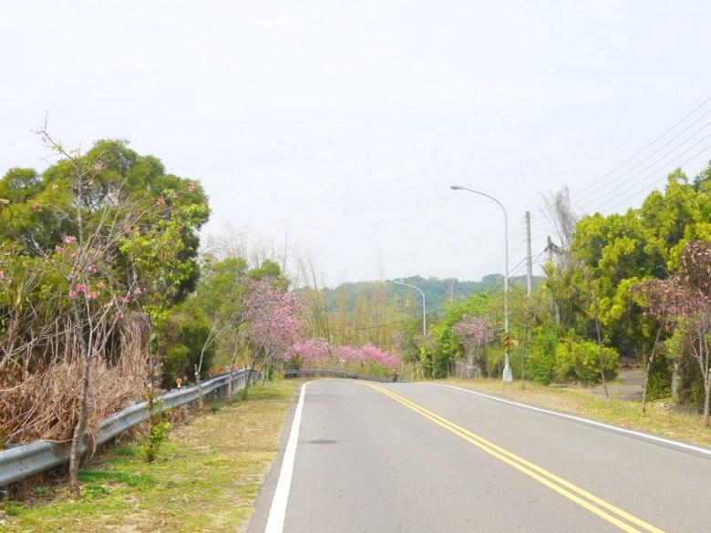 櫻花大道 | 日本味 | Sakura | さくら | サクラ | 芬園鄉139縣道 | Fenyuan | Changhua | 巡日旅行攝