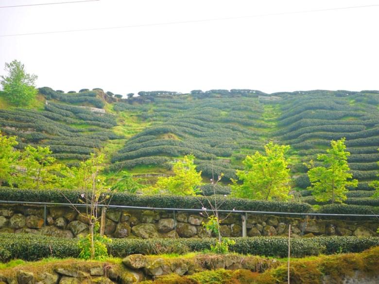 層層堆疊 | 綿延不絕 | 茶園 | 茶樹 | 南投八卦茶園 | 竹山 | 南投 | 一抹和風 | 巡日旅行攝
