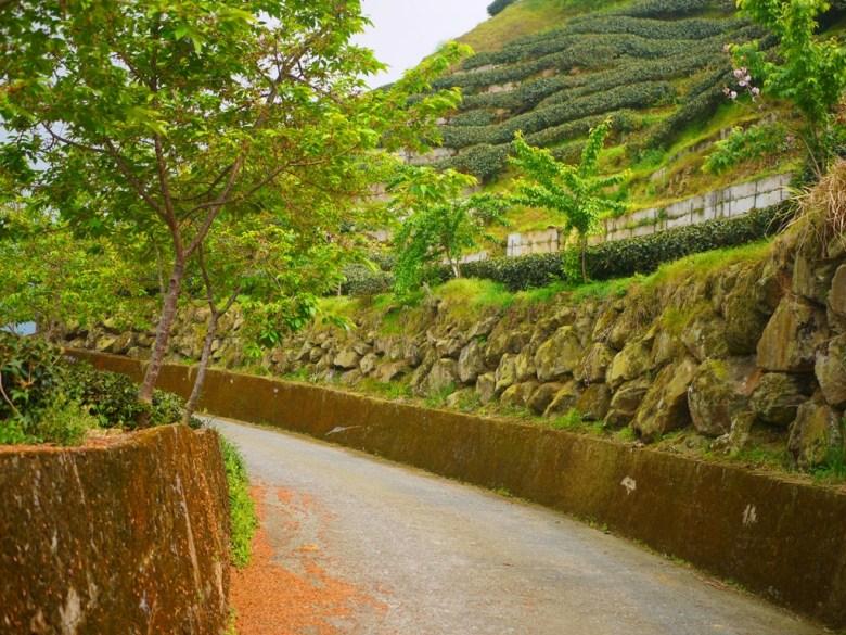 茶園小徑 | 感受茶鄉之美 | 高山茶園 | 美麗茶樹 | 軟鞍八卦茶園 | ジューシャン | Zhushan | Nantou | RoundtripJp