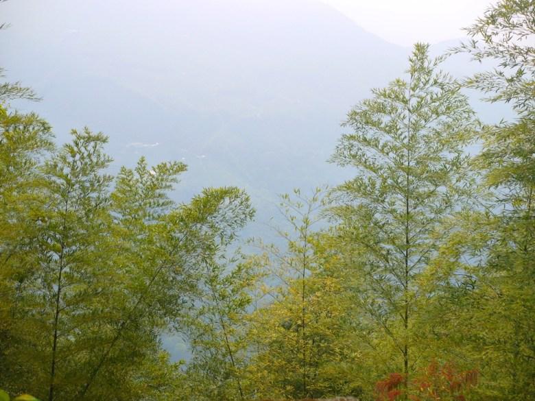 竹山名產 | 竹子 | 滿滿竹子園 | ジューシャン | Zhushan | Nantou | RoundtripJp