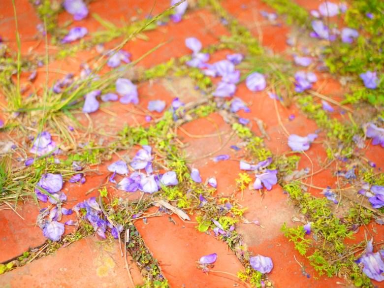 臺灣傳統紅磚 | 紫藤花瓣 | 山腳國小 | 苑裡 | 苗栗 | ユエンリー | ミアオリー | 巡日旅行攝