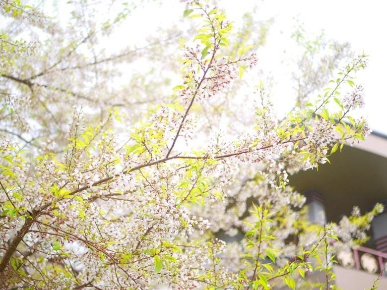 霧社櫻與大雪山遊客中心 | 大雪山國家森林遊樂區 | 和平 | 台中 | RoundtripJp