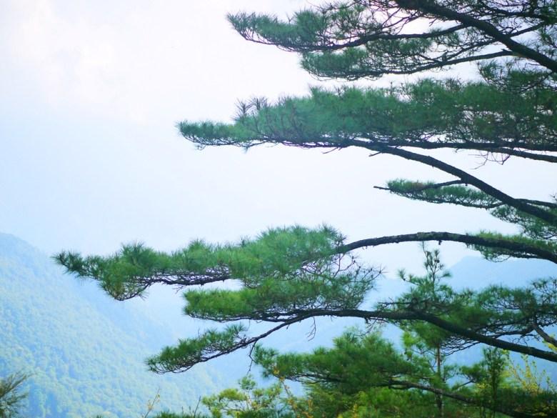 遠眺群山之美 | 清新自然 | 綠意盎然 | 大雪山國家森林遊樂區 | 和平 | 台中 | 巡日旅行攝