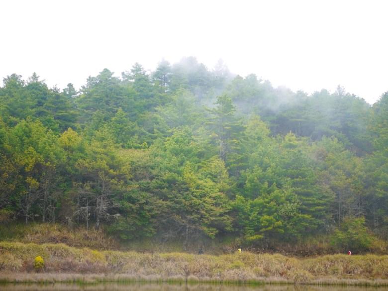 高山霧氣 | 雲霧繚繞 | 天池後方茂密的森林 | 海拔2,600公尺之上 | 大雪山 | 大雪山國家森林遊樂區 | 和平 | 台中 | RoundtripJp