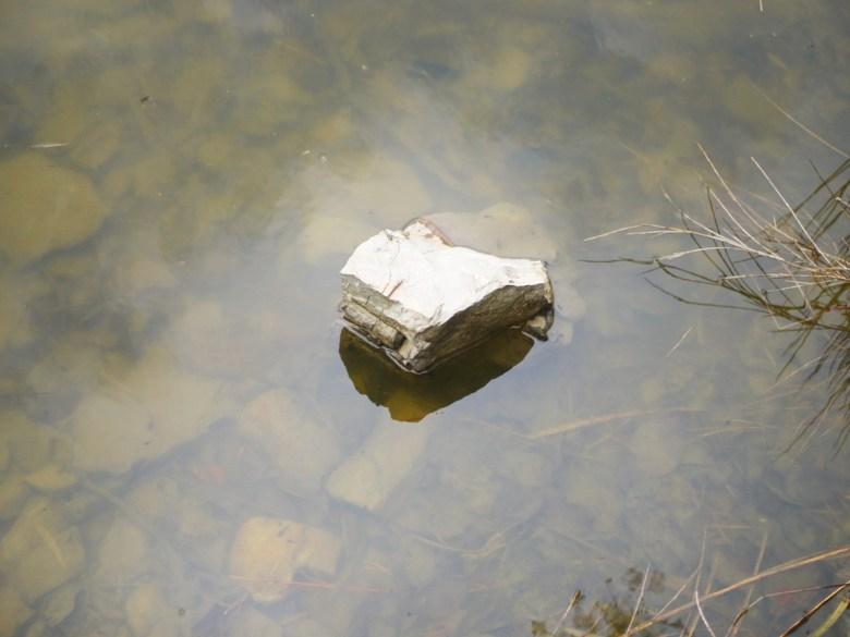 天池 | 石頭 | 池水 | 蝌蚪 | 海拔2,600公尺之上 | 大雪山 | 大雪山國家森林遊樂區 | 和平 | 台中 | 巡日旅行攝