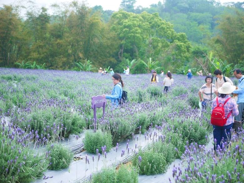 漫步在薰衣草花海之中 | 臺灣旅人 | Grace garden | Touwu | Miaoli | Wafu Taiwan | RoundtripJp