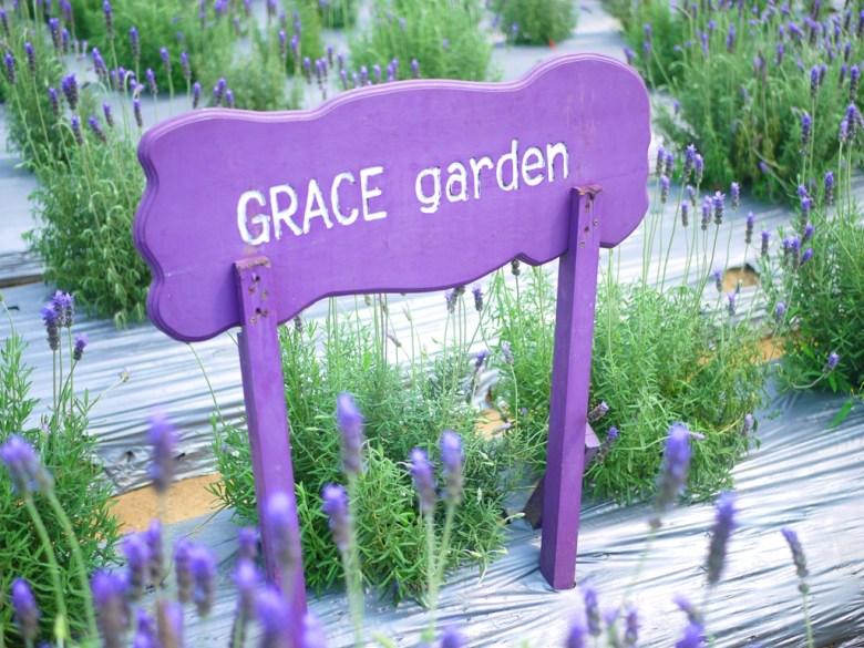 香氣濃郁 | 薰衣草花香 | Grace garden | Touwu | Miaoli | RoundtripJp
