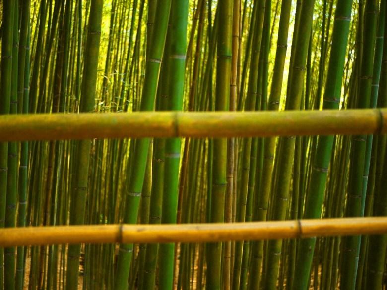 整齊劃一的竹林 | 清新安靜 | 靜謐的竹林 | 烏嘎彥竹林 | 泰安 | 苗栗 | 巡日旅行攝