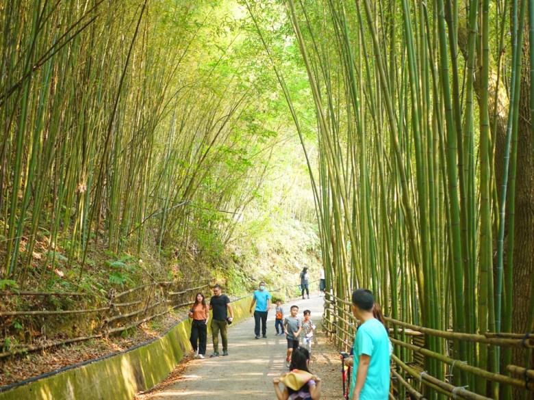 臺灣旅人 | 賞竹爬山 | 最有日本京都嵐山的竹林小徑氣氛的一小段 | 烏嘎彥竹林 | 泰安 | 苗栗 | RoundtripJp