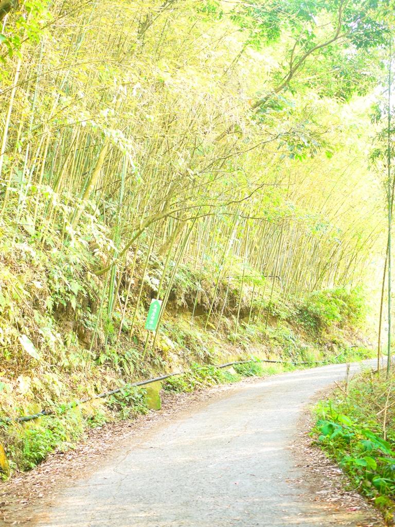 往前1.3公里為烏嘎彥市集 | 靜謐的竹林 | 烏嘎彥竹林 | 泰安 | 苗栗 | 巡日旅行攝