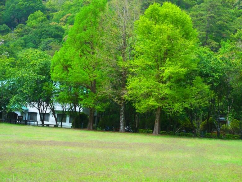 綠意盎然 | 大片草皮 | 綠樹 | 奧萬大國家森林遊樂區 | レンアイ | ナントウ | 和風臺灣 | RoundtripJp