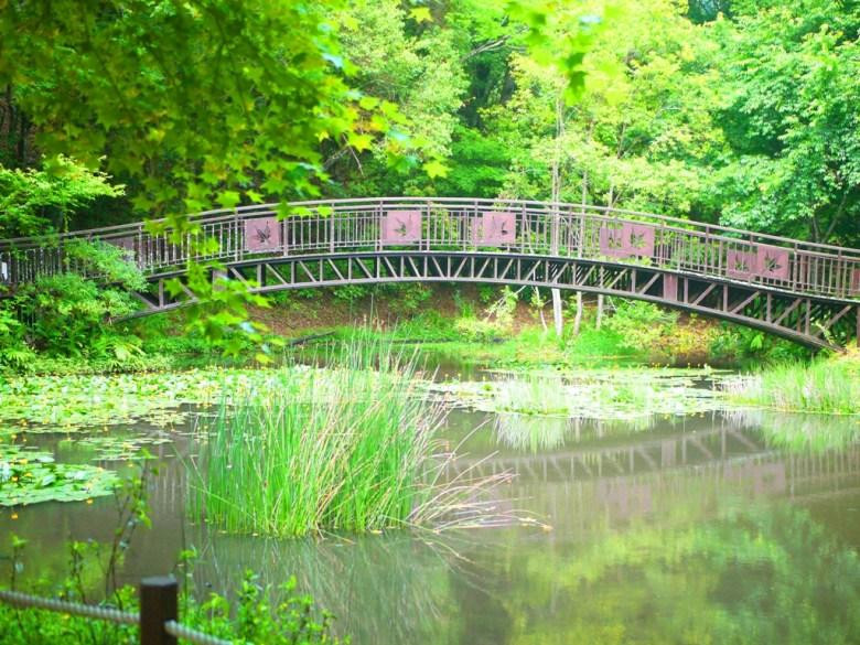 有著楓葉印象的鐵橋 | 生態池 | Ecological Pond | 奧萬大國家森林遊樂區 | レンアイ | ナントウ | 巡日旅行攝