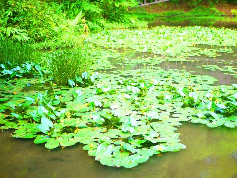 綠意盎然 | 生態池 | Ecological Pond | 奧萬大國家森林遊樂區 | レンアイ | ナントウ | RoundtripJp