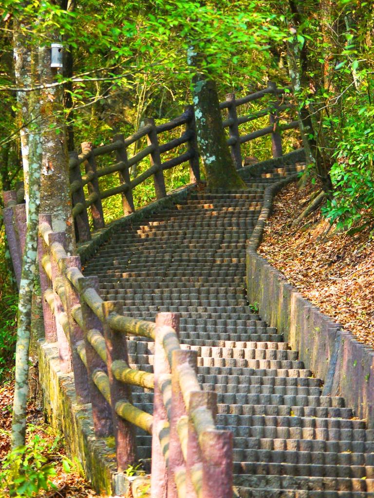 陡峭的階梯 | 往奧萬大吊橋方向 | 奧萬大國家森林遊樂區 | レンアイ | ナントウ | 巡日旅行攝
