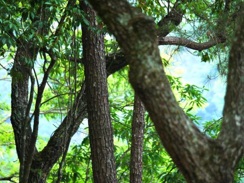 自然生態 | 森呼吸 | 奧萬大國家森林遊樂區 | レンアイ | ナントウ | 巡日旅行攝