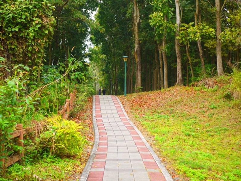 森林小徑   露營區方面   人煙稀少   自然秘境   Takeyama   Zhushan   Nantou   RoundtripJp