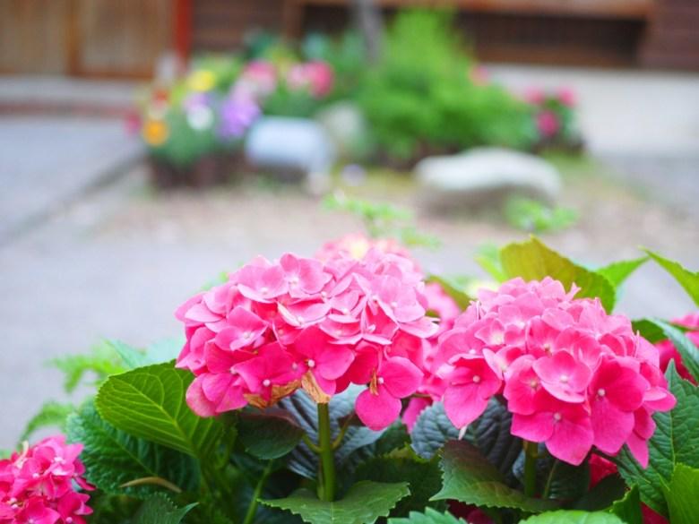 粉紅的繡球花 | 日本味 | 小鎌倉感 | 山城日式宿舍 | Nanzhuang | Miaoli | ナンジュアン | ミアオリー | 巡日旅行攝