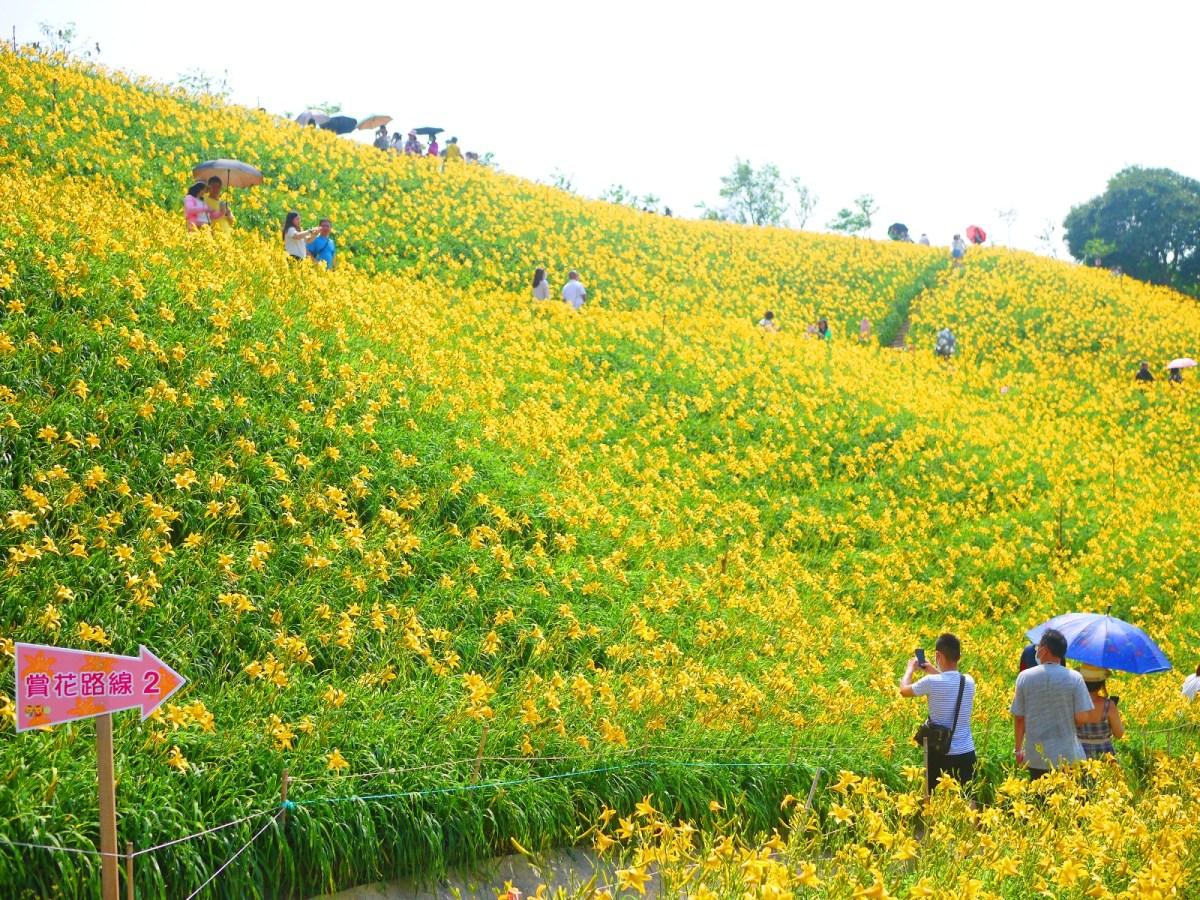 像極了日本黃金油菜の花畑 | 日本味 | 黃金花海 | 金針花 | 台灣旅人 | Huatan | Changhua | RoundtripJp