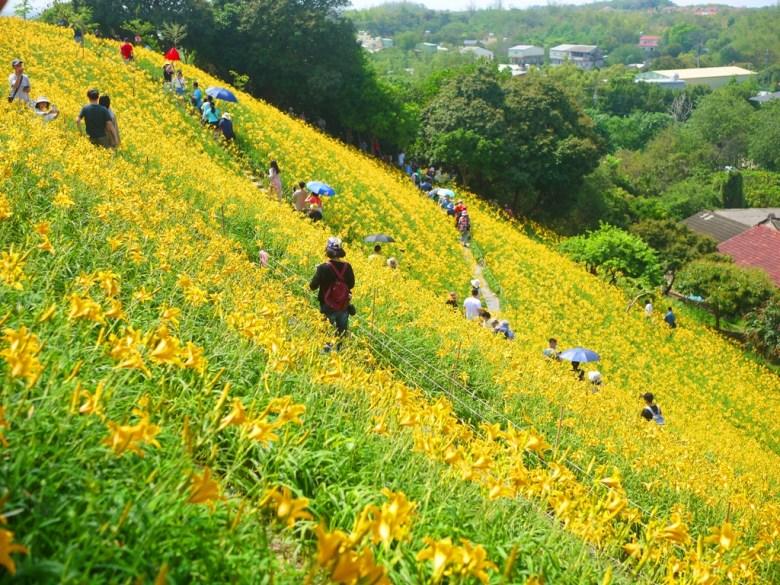 山坡上的夢幻黃金花海   台灣旅人   台灣傳統建築   Huatan   Changhua   RoundtripJp   巡日旅行攝