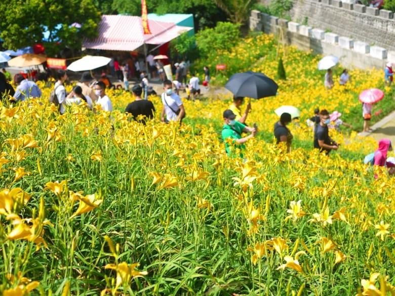 被黃金花海簇擁的台灣旅人   台灣風景   夢幻絕美   Huatan   Changhua   RoundtripJp   巡日旅行攝