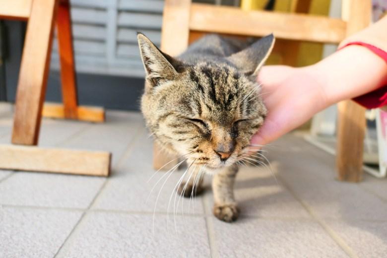 旅途的小確幸   貓咪   埼玉   Saitama   關東地方   Kanto   日本   Japan   巡日旅行攝