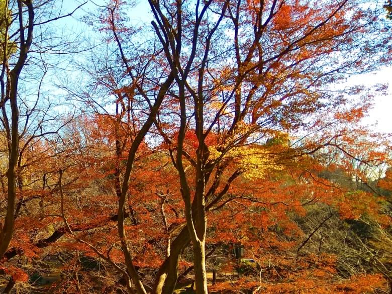 秋之盛宴 | 紅葉 | 東京 | Tokyo | 日本 | Japan | 巡日旅行攝