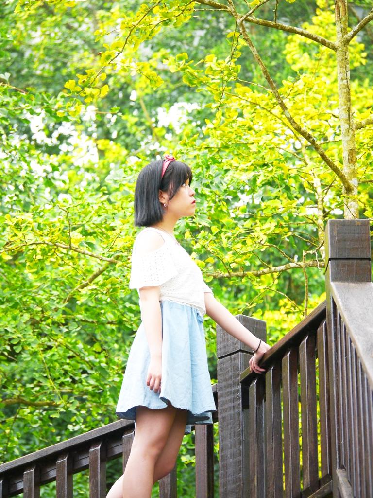 絕美銀杏景點   秋天的浪漫   網美景點   鹿谷   南投   一抹和風   巡日旅行攝   RoundtripJp