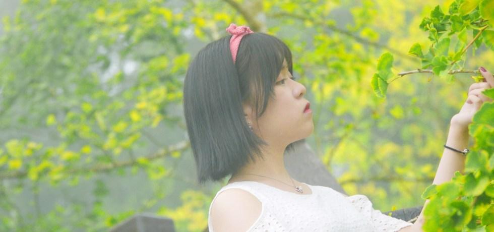 秋天的饗宴 | 大自然的美景 | 金黃銀杏 | 網美 | ルーグー | Lugu | Nantou | Taiwan | 和風臺灣 | 巡日旅行攝 | RoundtripJp