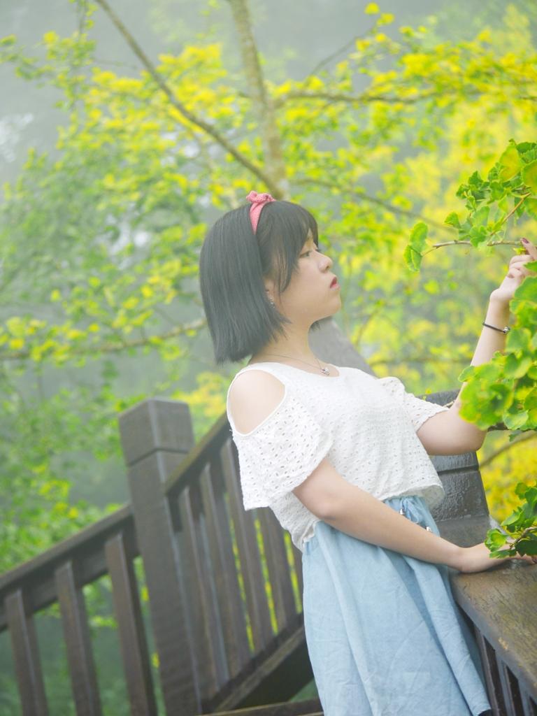 一葉知秋   金黃色浪漫銀杏   Ginkgo biloba   ルーグー   Lugu   Nantou   Taiwan   Wafu Taiwan   巡日旅行攝   RoundtripJp