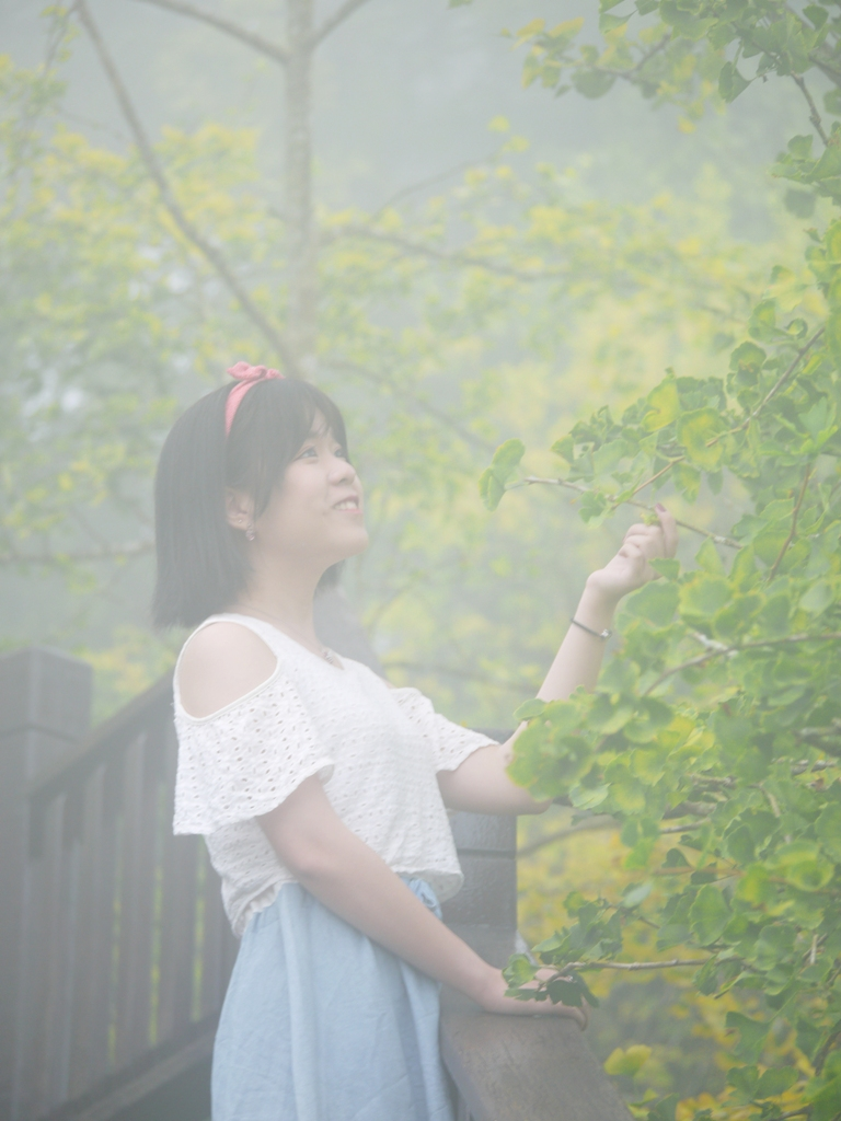 雲霧繚繞   清新自然   銀杏步道   網美   ルーグー   Lugu   Nantou   Taiwan   和風臺灣   巡日旅行攝   RoundtripJp