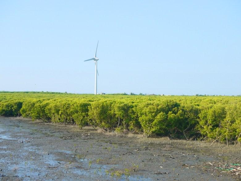 被紅樹林簇擁的白色風車   絕美樹海   彷彿夢境世界   ファンユエン   ほうえん   ジャンホワ   しょうか   Wafu Taiwan   巡日旅行攝   RoundtripJp
